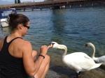 Swans! Lucerne.